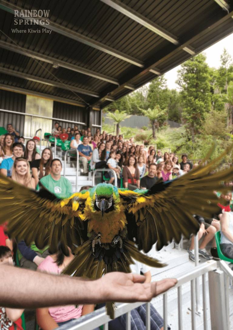 Rainbow Springs Bird Show Macaw landing