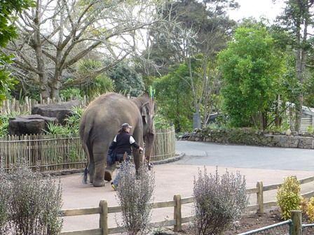 園内を歩く象4