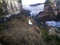 Muriwai Beach2