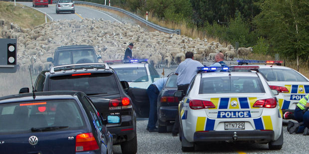 SCCZEN_Central_Otago_Car_Chase2_620x311