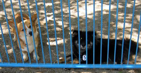 2007-8dog.jpg