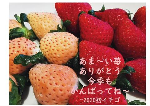 2020初イチゴ