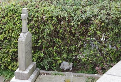 外人墓地のニャン