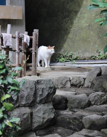 日本のねこ(^^)