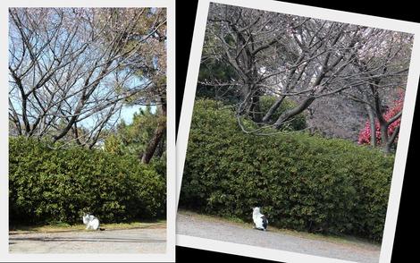 桜の下のねこくん