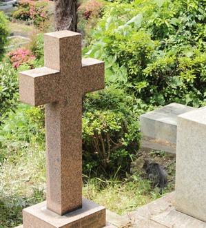 外人墓地のねこ