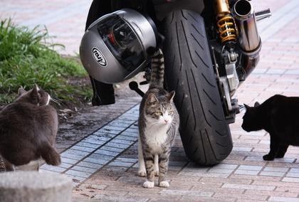 バイクとねこ