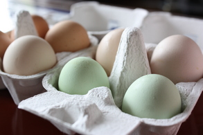 黄緑色の卵