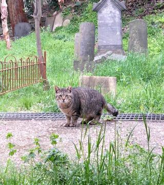 外人墓地にゃんにゃん