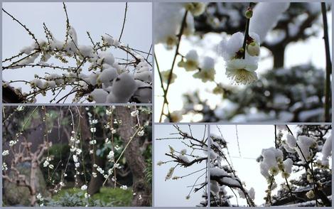 2015.3.10 雪