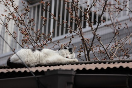 屋根の上のニャンコ