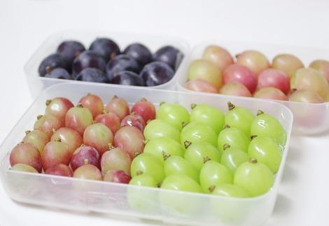 葡萄の冷蔵保存