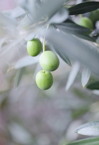 Olive 2021.9.12