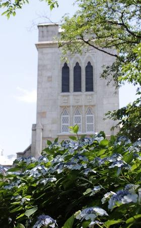 横浜聖公会と紫陽花
