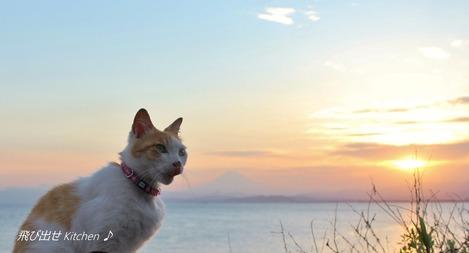 夕焼け富士とねこ