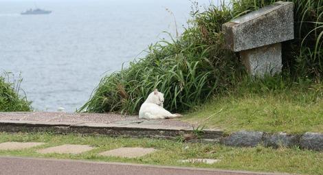 城ケ島の猫-2