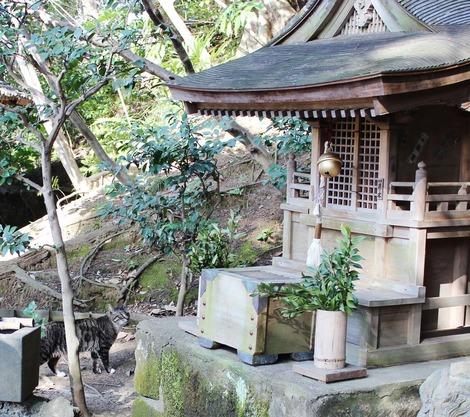 神社のニャンコ