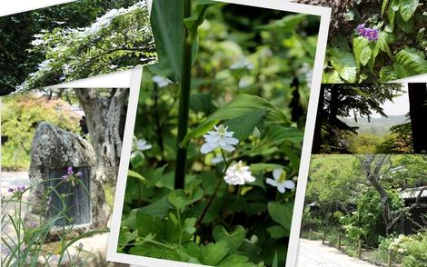 東慶寺 6月