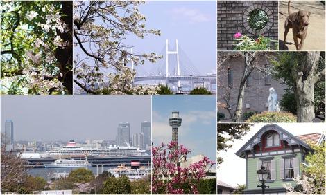 Yokohama 春風景