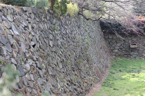 石垣のねこ