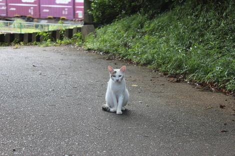 小田原城の猫