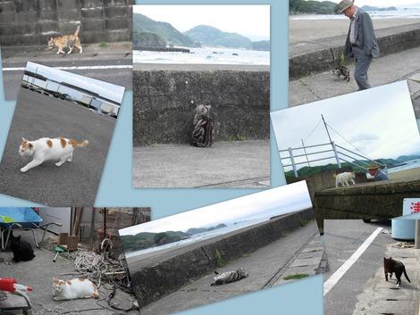 老人と海、と猫