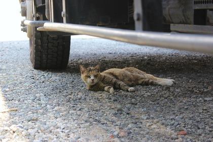 車の下のねこ-1