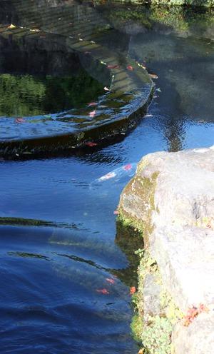 鯉の泳ぐ町