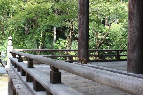 妙本寺のねこ