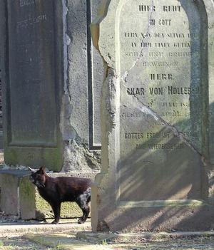 外人墓地のクロちゃん