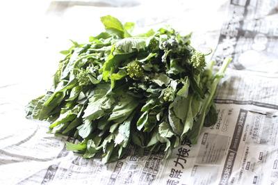 野沢菜の菜の花