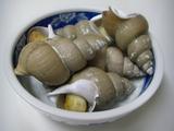 茹でたバイ貝