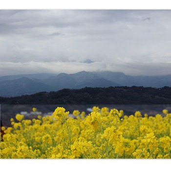 富士山の方向