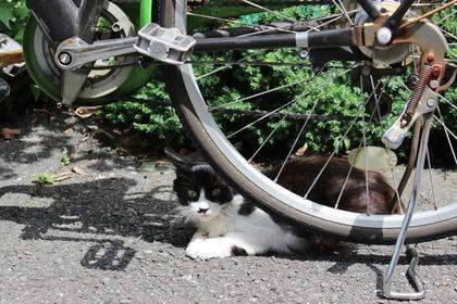 自転車の日蔭ニャンコ