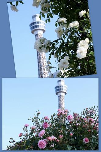 マリン・タワー