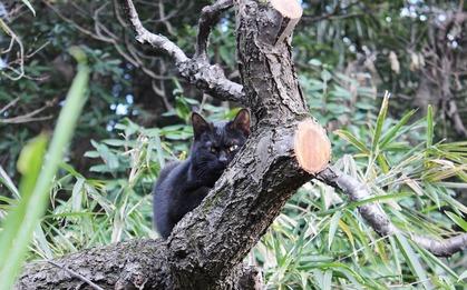 木の上クロちゃん