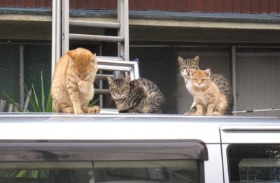 車の屋根の上