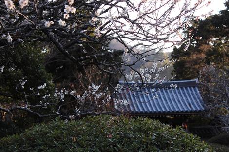夕方の浄妙寺