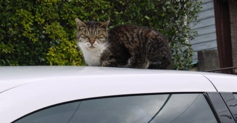 睨んでる猫-2