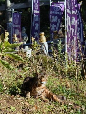 竜宮天神の猫