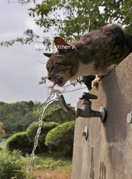 お水大好き