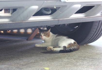 車の下のねこ-4