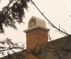 煙突のねこ