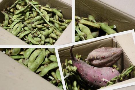 黒豆の枝豆とサツマイモ