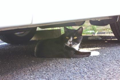 車の下のねこ-2