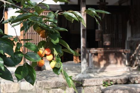 柿のある風景