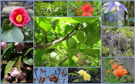 4月中旬の花々