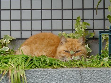 睨んでる猫
