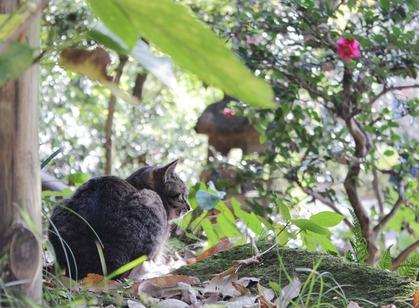 山茶花と猫