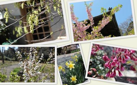 花々 2014.3.25